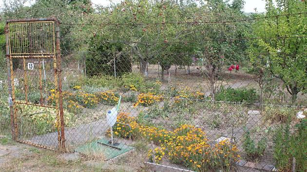Ilustrační foto. Zahrada