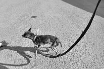 Zachráněný pes.
