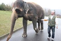 Fotoreportér Deníku si na jeden den vyzkoušel nelehkou práci ošetřovatele slonic v Zoologické zahradě v Ústí nad Labem.