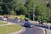 V Dubí se procházeli koně po silnici.
