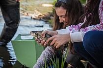 Děti pomáhají oživit řeku Bílinu, vysadily ryby