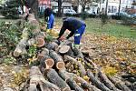 Likvidace vyvrácených a polámaných stromů v Teplicích.