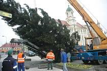 Teplice budou mít pět stromů