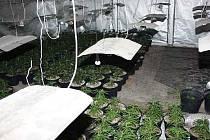 Kriminalisté odhalili další nelegální pěstírnu marihuany. Tentokrát byla umístěna ve starším objektu v katastru obce Hrob na Teplicku