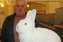 Výstava chovatelů králíků, holubů a drůbeže v Žalanech
