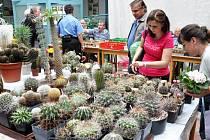 Výstava kaktusářů v Krupce / ilustrační foto