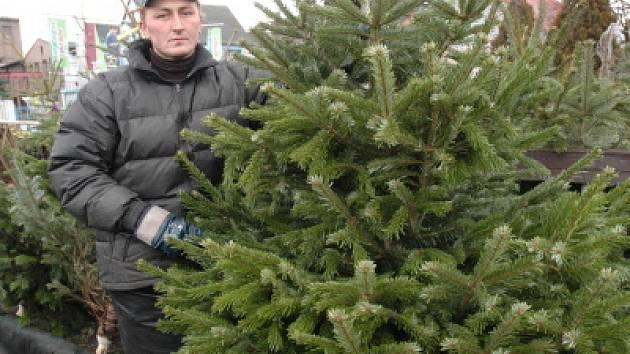 Prodej stromků je v plném proudu