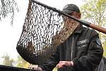 Rybáři z teplické organizace slovili Dolní rybník v Zámecké zahradě.