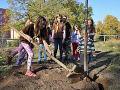 Sokolové a skauti zasadili v Teplicích Strom svobody