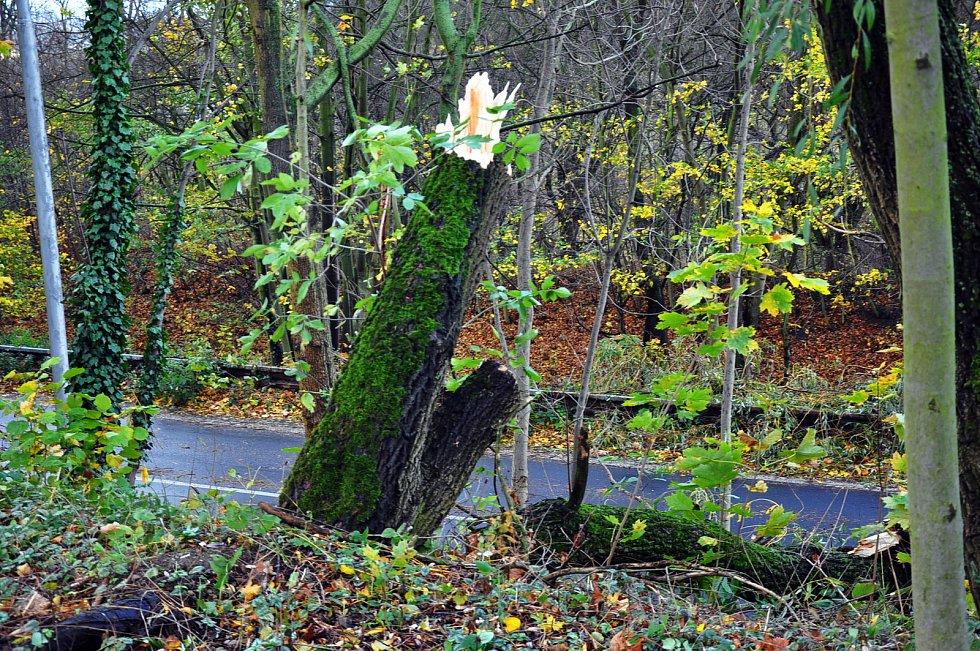Ulomený strom v ulici prokopa Holého