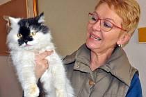 """Do nového """"kočičího domu"""" v Krupce přestěhoval své svěřence Fousek. Nezisková organizace pomáhá opuštěným kočkám na Teplicku už sedm let."""