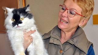 Nejhezčí oholená kočička