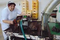 Pekárna Pecud v Proboštově vyrábí tradiční velikonoční beránky.