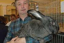 Antonín Mouka ukazuje výstavního králíka