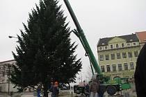 Vánoční strom u Prioru