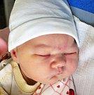 STELLA KOŽENÁ se narodila Zdeňce Hradecké ze Bžan 14. prosince ve 13.32 hod. v teplické porodnici. Měřila 53 cm a vážila 4,40 kg.