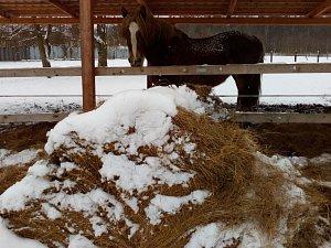 Zasněžené sobotní ráno v Proboštově na Teplicku.