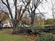 Ulomená větev v Lázeňském parku Teplice