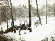 Zima v Krušných horách na archivních pohledech a fotografiích. Obora Mstišov - Dvojhradí.