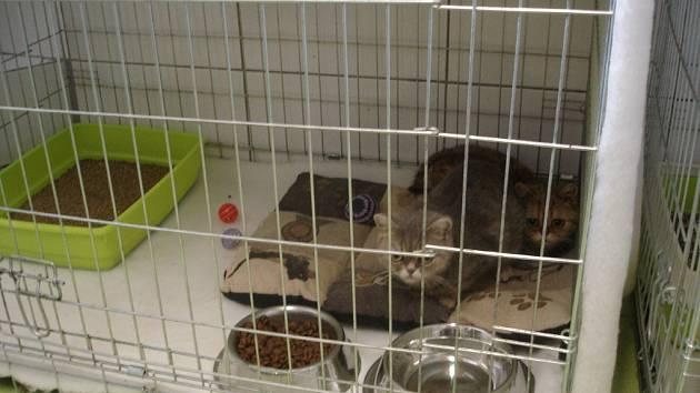 Většina z 56 týraných koček již našla nového majitele.