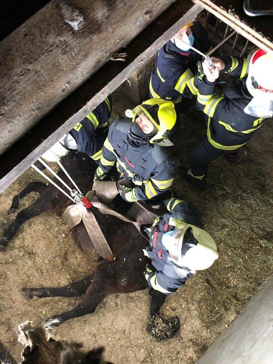 Hasiči asistovali při záchraně koně.