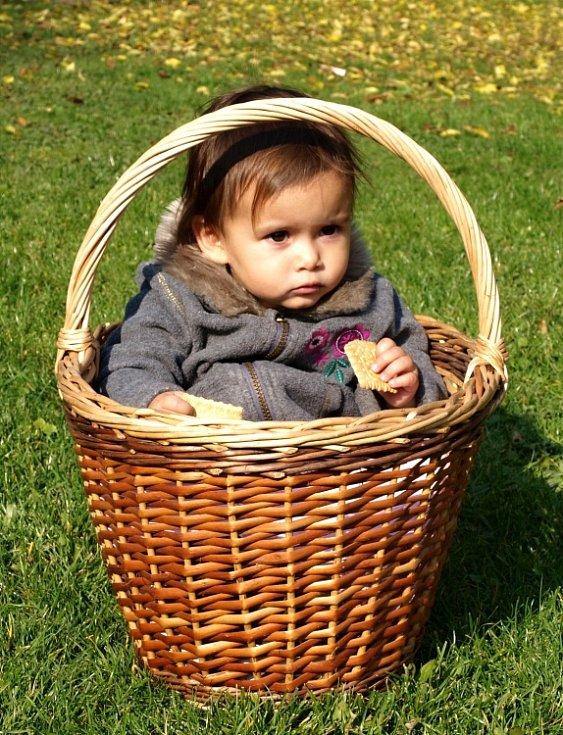 Když houby nerostou... Košík na houby mám marně připravený. Kordulce se v košíku moc líbilo... Ladislav Večerka, Oldřichov