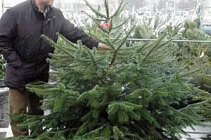 Prodej vánočních stromků v Teplicích