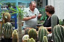 V Krupce vystavují kaktusy a sukulenty