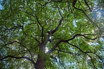 Mezi nejstarší rostliny teplické botanické zahrady patří dva exempláře druhu nahovětvec dvoudomý, kterým může být něco kolem 90 let.