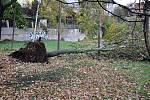 Vyvrácené stromy v Mlýnské ulici v Teplicích