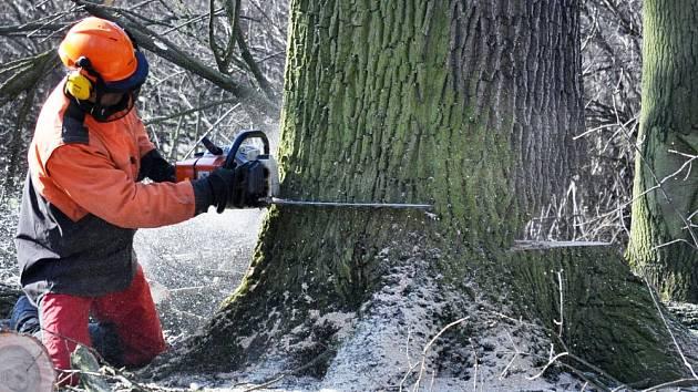 Nemocné stromy v Zámecké zahradě padají k zemi