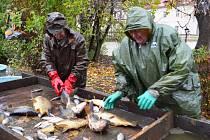 Tepličtí rybáři lovili kapry z bahna na Zámecké
