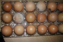 Plesnivá vejce, která Iveta Bezděková koupila v Tescu na Šanově v Teplicích