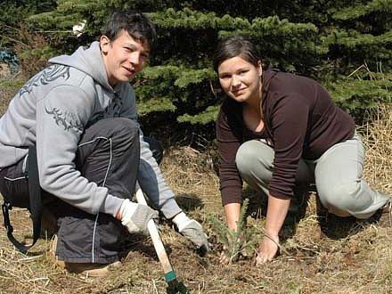 Školáci sázeli smrčky v lese na Cínovci. Celkem vysadili 500 nových stromků.