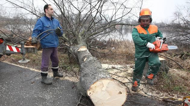 Kácení stromů vyvolalo mezi Duchcovany neklid.