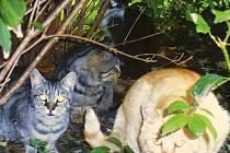 PROČ? Komu vadily kočky, které sdružení Fousek nechalo vykastrovat, stará se o ně a krmí je natolik, že je neváhal zabít?