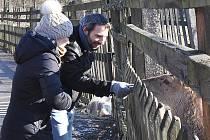 Veřejně přístupná každý den, po celý rok. Krmení pro zvířátka k dispozici za 20 korun u vstupu, parkovné 20 korun. Vybrané peníze jdou na zajištění provozu obory.  Možno zaplatit i dobrovolné vstupné do kasičky u vstupu. K vidění je lesní zvěř.