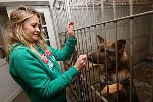 Útulek v Žimu se stará celkem o 47 psů, péči věnuje také desítkám koček.