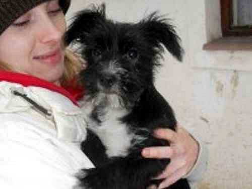 Tříměsíční psí holčička Anička
