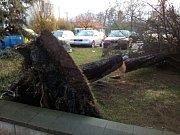 Nápory větru nevydržel ani jeden ze vzrostlých smrků u parkoviště za obecním úřadem v Proboštově.