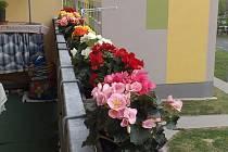 """Balkón zdobí květiny. """"Udělejme si radost,"""" říká čtenářka"""
