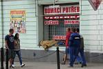 Na rozdíl od menších měst v okrese, Teplice lavičkovou vyhlášku nemají.