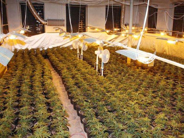 Pěstírna marihuany byla odhalena v Krupce