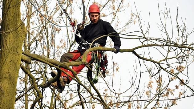 Arboristé ošetřovali dřeviny v zámeckém parku v Duchcově/ ilustrační foto