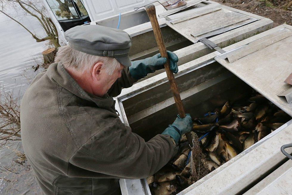 Rybáři na severu Čech začali zarybňovat všechny chovné rybníky. V pátek prováděli zarybnění na Chomutovsku a Teplicku.