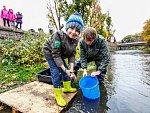 Děti z Hostomic vypustily ryby do řeky Bíliny