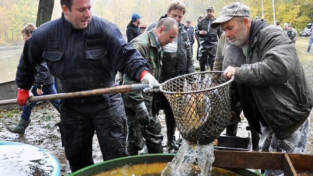 Rybník Jaroslav v Proboštově potěšil rybáře úrodou 1500 kaprů