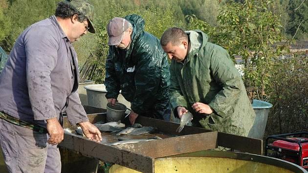 Výlov rybník Mstišov
