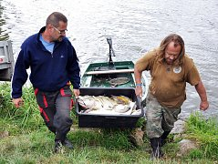 Úhyn ryb v modlanské nádrži.