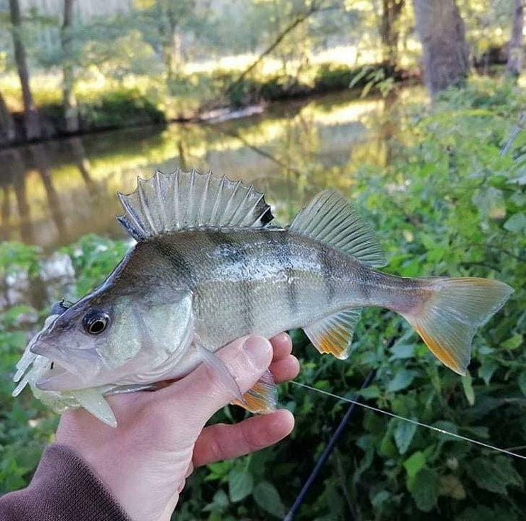 Na Vranově, pod Pálavou i na jiných nádržích a řekách zkoušejí svůj um mladí rybáři z VranovTeamu. A o podařené úlovky nemají nouzi, jak ukazují snímky z posledního podzimu a nynější zimy.